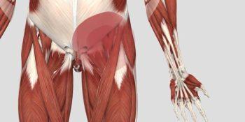 Pubalgia con fisioterapia. Síntomas y tratamiento